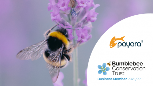 Team Payara Chooses the Bumblebee Conservation Trust as its Charity of the Year